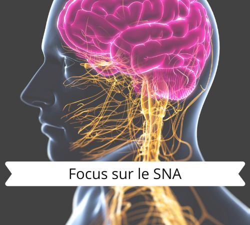 Focus sur le Système Nerveux Autonome: le pouvoir du SNA