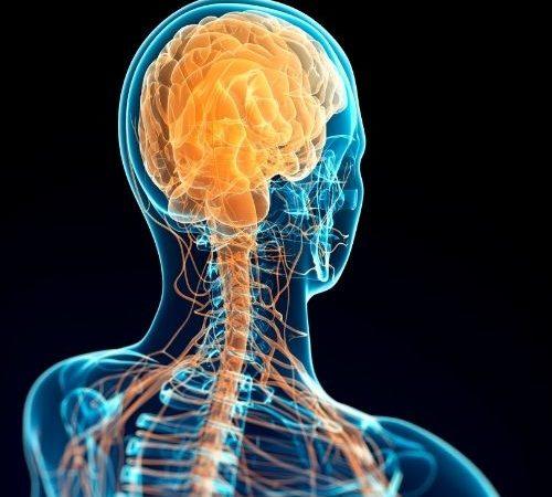Comprendre les concepts clés liés au système nerveux autonome (SNA)